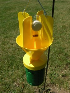 Japanese beetle trap with floral lure and pheromone